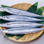 秋刀魚が旬の2018年の秋がやってくる!豊漁らしいが一匹の値段はいくらなのか。