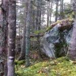 カナダの森の地面が大きく呼吸をしている!何故地面は揺れ動くのか【動画あり】